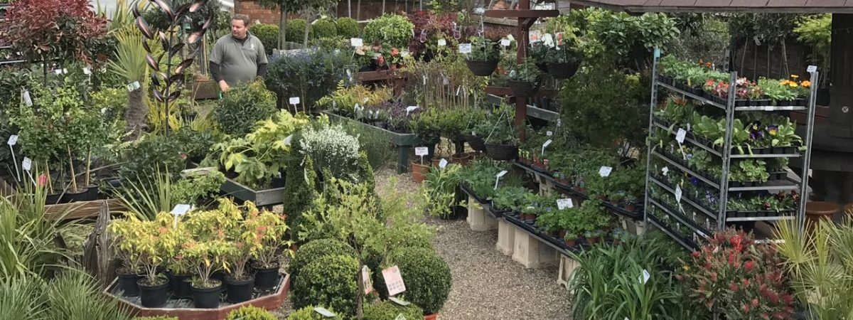 Call and view a huge selection of affordable Plants at Plantmania